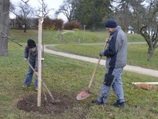 Obstbaumbestand erweitert